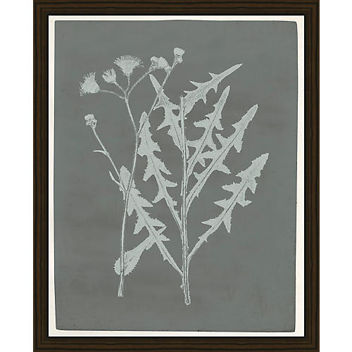 Botanical Pressings I, Soicher Marin