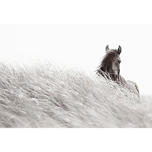Windy Solitude, Drew Doggett