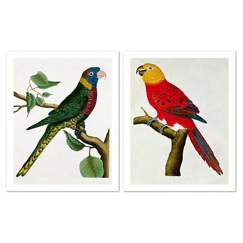 George Leclerc, Parrots Diptych