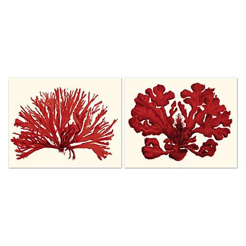 MIranda Baker, Corals II, Red, Unframed