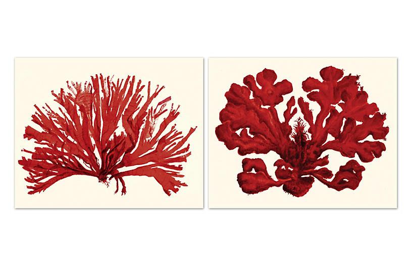 Miranda Baker - Corals - William Stafford