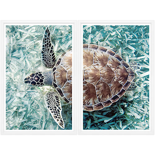 Green Sea Turtle Diptych