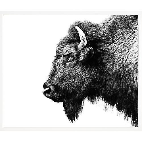 , Bison