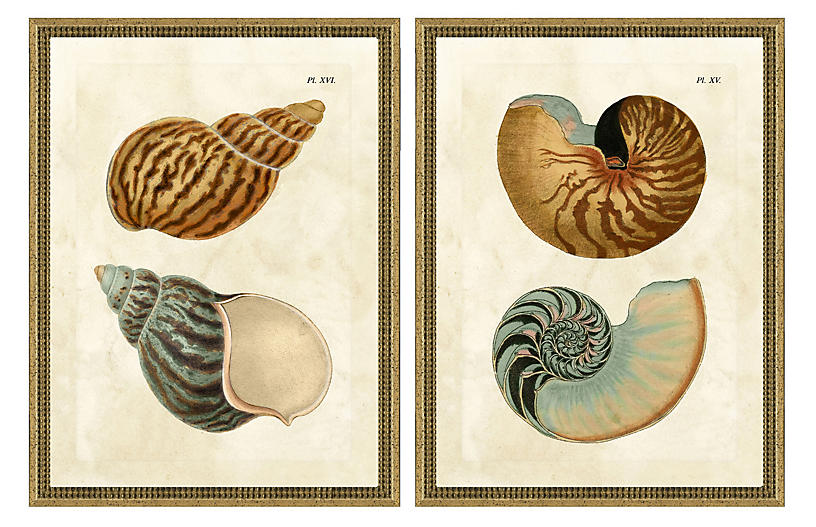 Double Shell Diptych