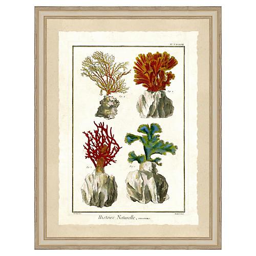 Coral Print II