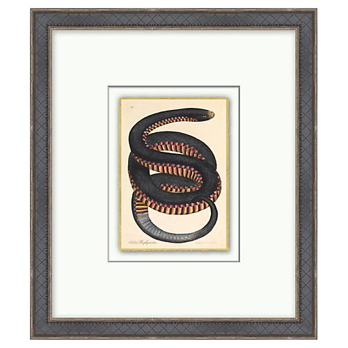 Crimson Sided Snake, Gold Leaf