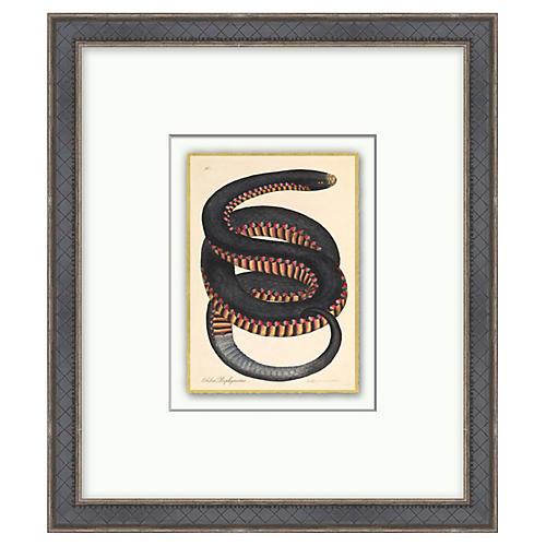 Crimson Sided Snake, Gold Leaf
