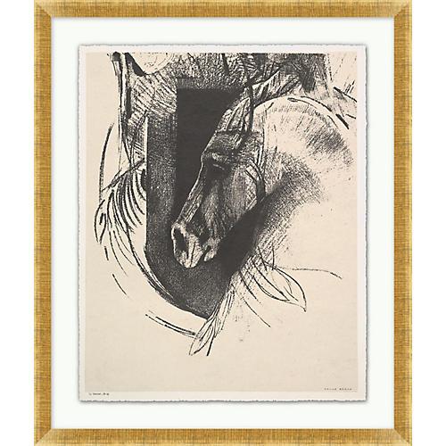 , Stallion