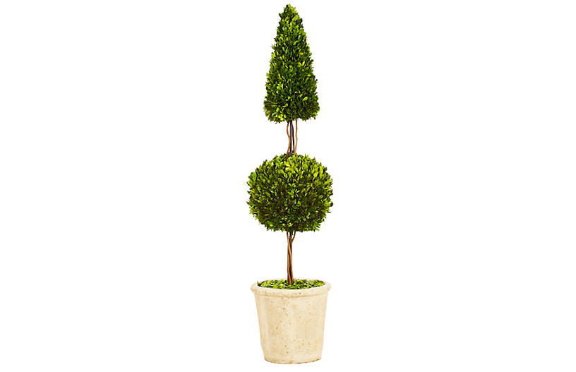 4' Boxwood Topiary in Planter, Preserved
