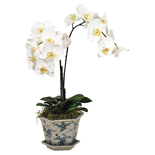26'' Orchid in Cachepot, Faux