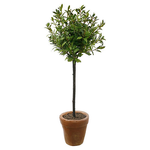 "32"" Potted Myrtle Topiary, Faux"