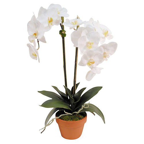 "26"" Orchid in Planter, Faux"