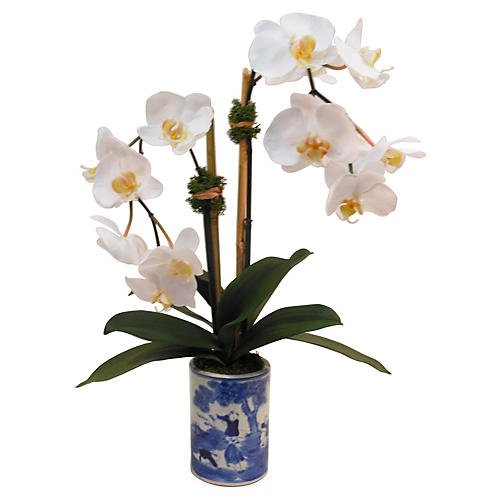 "21"" Phalaenopsis in Planter, Faux"
