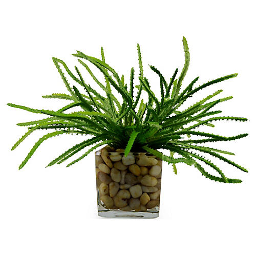 """13"""" Hairy Succulent, Faux"""