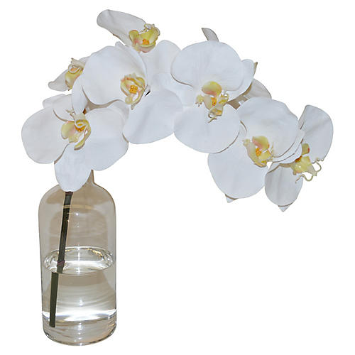 "13"" Phalaenopsis in Bottle, Faux"