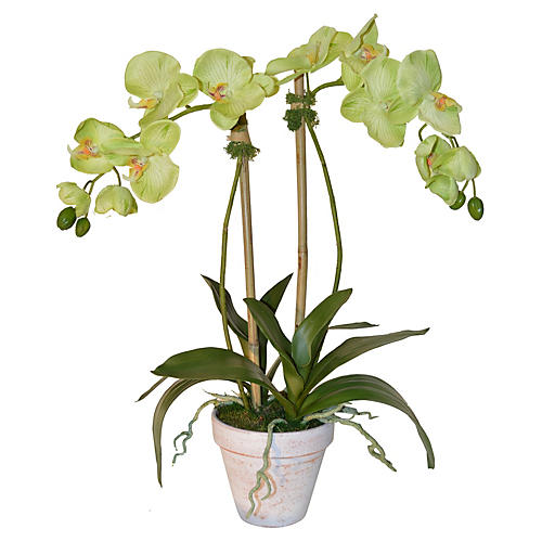 "24"" Phalaenopsis in Planter, Faux"