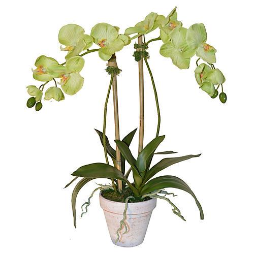 "24"" Phalaenopsis in Planter, Faux"