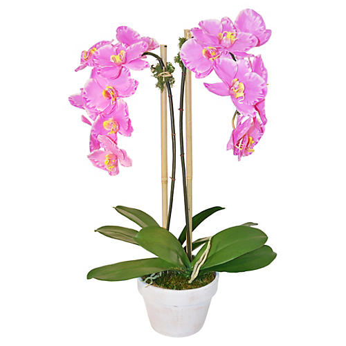 "26"" Phalaenopsis in Planter, Pink"
