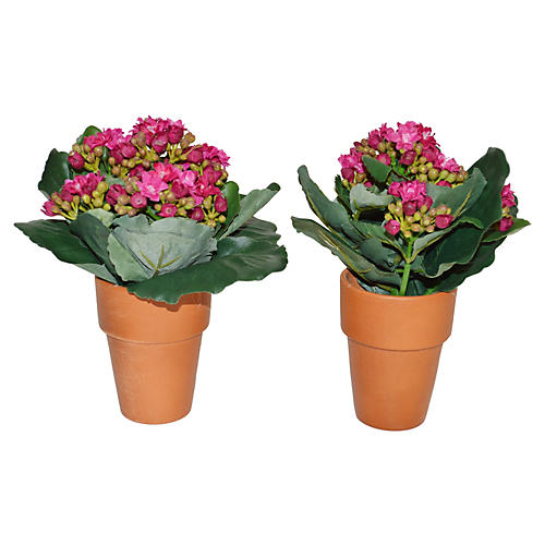 """S/2 8"""" Kalanchoes in Planter, Faux"""