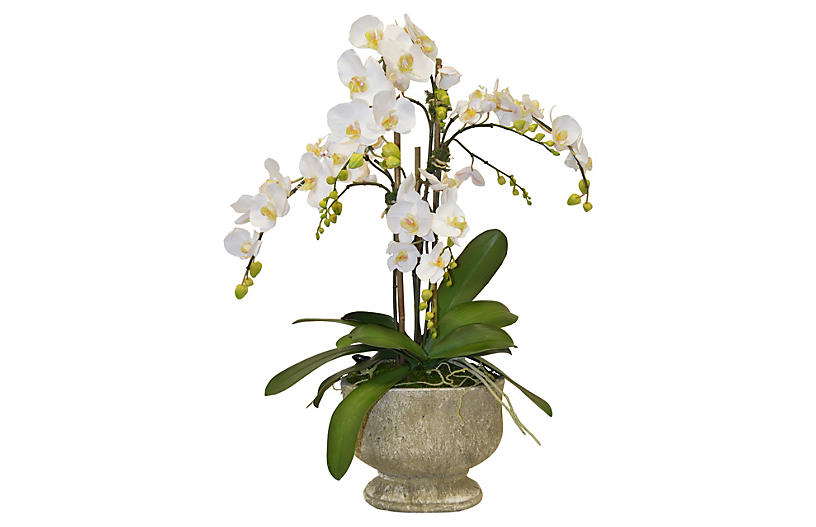 Nearly Natural Phalaenopsis Orchid