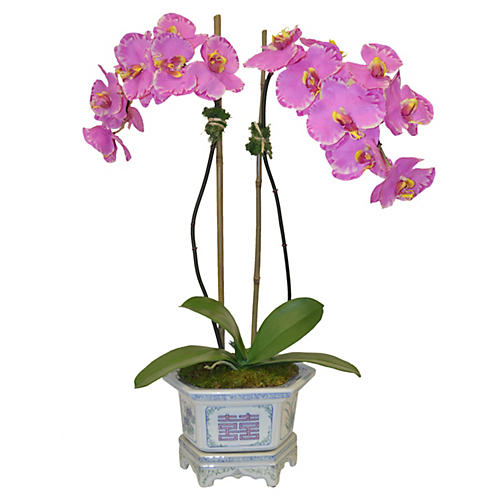 """22"""" Pink Orchids in Container, Faux"""