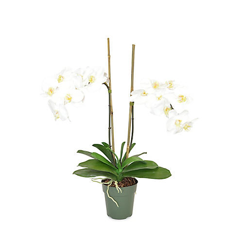 "30"" Francis Phal Orchid Plant, Faux"