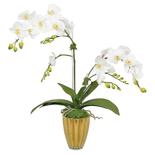 """28"""" Dorset Phal Orchid Arrangement, Faux"""