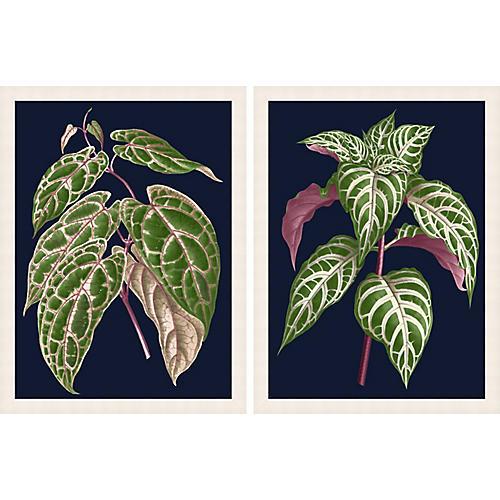 Botany on Blue 1-2, Lillian August