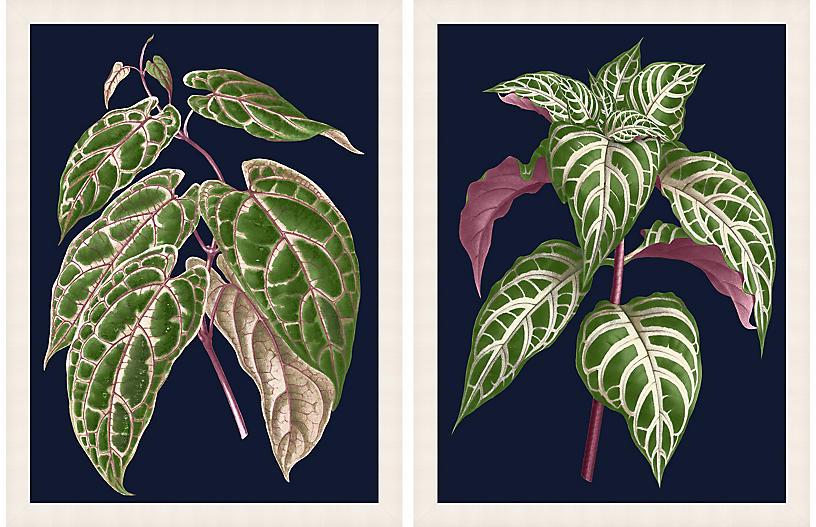 Lillian August, Botany on Blue 1-2