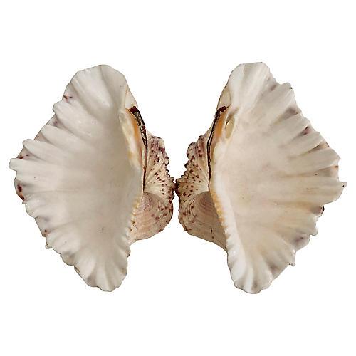 Tridacna Gigas Shells, S/2