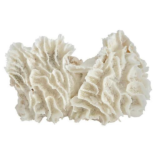 Natural White Lettuce Coral Specimen