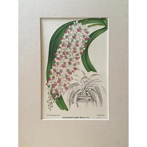 Orchids 19th-C. Floral Botanical Litho