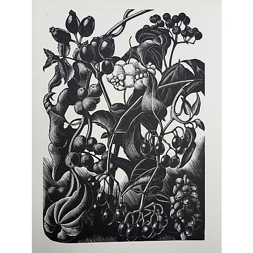 Claire Leighton Woodblock Print Garden