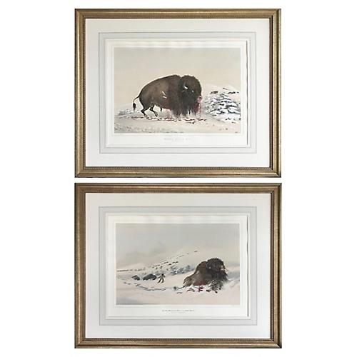 Catlin Native American Buffalo Hunt 1844