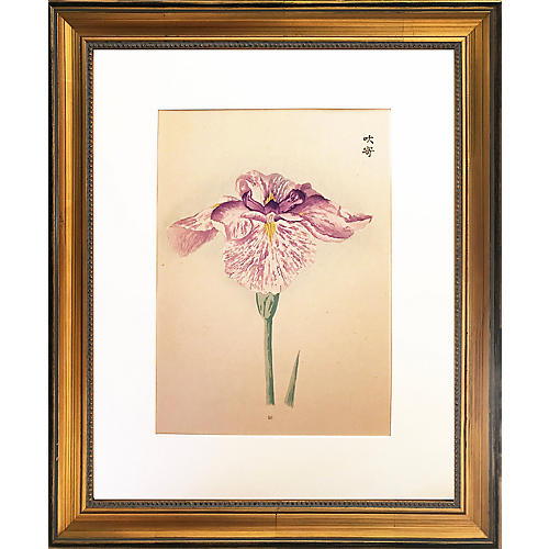 Japanese Iris Woodblock Botanical C1900
