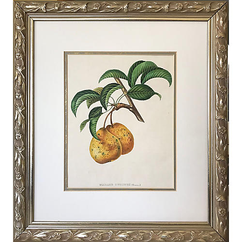 19th-C. French Pear Color Lithograph