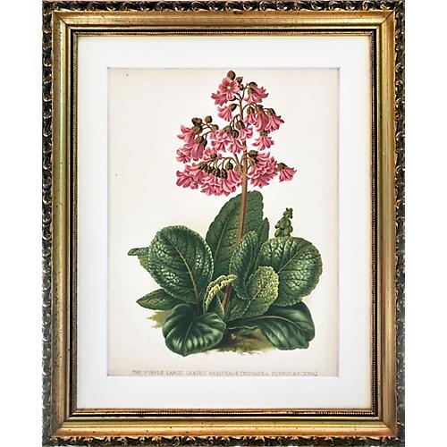 Antique Floral Botanical Print 19th-C