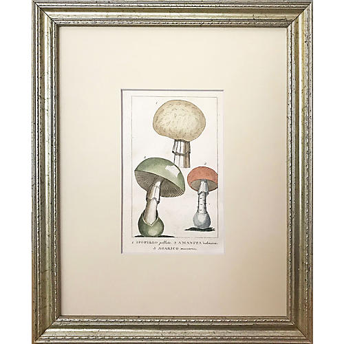 19th-C. Poisonous Mushroom Botanical