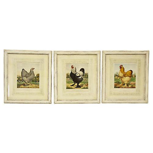Prize-Winning Chicken Prints, S/3