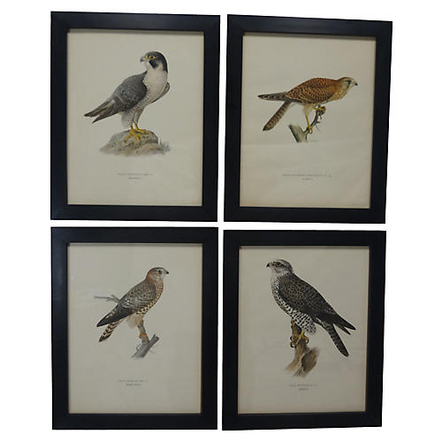 Swedish Birds Of Prey Prints, S/4