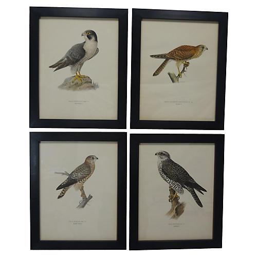 Swedish Birds Of Prey Prints, S/4
