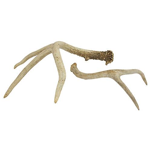 Shed Deer Antlers, Pair