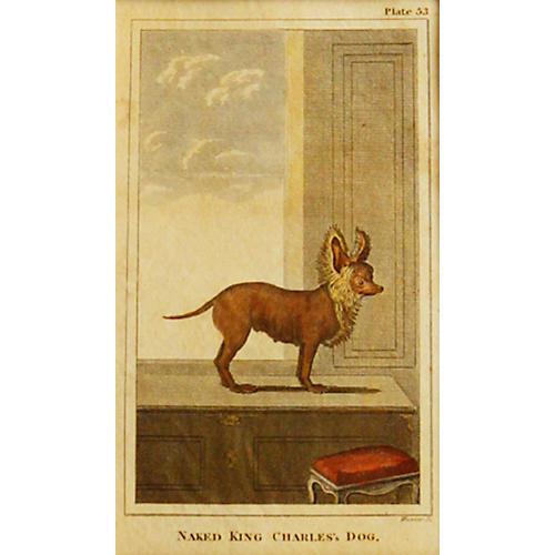 Naked King Charles's Dog, C. 1790