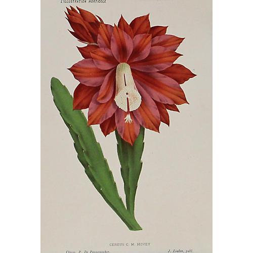 Red Cactus, 1873