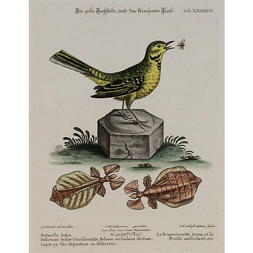 Yellow Songbird w/ Insects, C. 1750