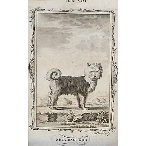 Siberian Dog, 1785