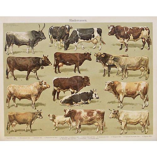 Cattle, C. 1870