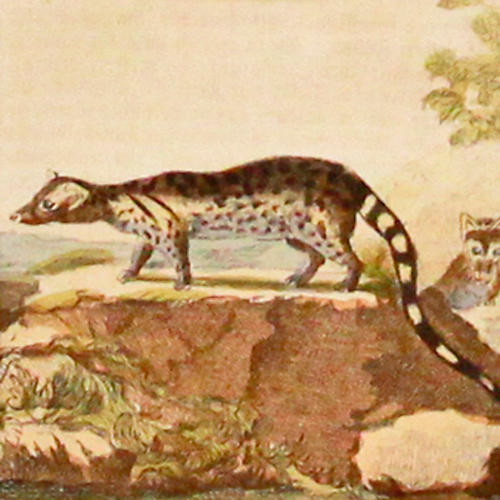 Genette, 1780