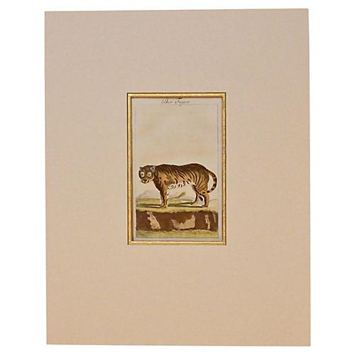Tiger, 1780