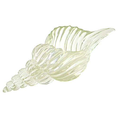 Clear Conch Shell